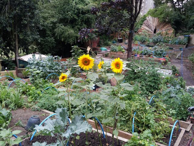 Maryon Park Community Garden
