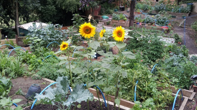 Maryon Wilson Park community garden